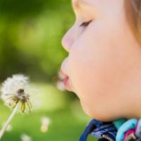 Caucasian blond baby girl blows on a dandelion flower in a park, selective focus on lips